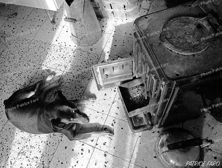 BricoVidéo image du jour - Photo Patrice Faro